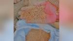 पंजाब में सरकारी डिपो पर गरीबों को बांटा कीड़े वाला गेहूं, अधिकारी बोले- बढ़िया है, फिर बोरियां फाड़ीं