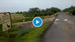 VIDEO: गुजरात में एक साथ सड़क पार करते दिखे 3 हजार से ज्यादा हिरण, मोदी ने कहा- अद्भुत दृश्य