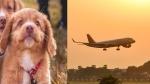 कुत्ते की खातिर मालिक ने बुक किया फ्लाइट का पूरा बिजनेस क्लास, लाखों खर्च कर साथ किया सफर