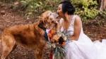 दुल्हन ने कुत्ते के साथ कराया वेडिंग फोटोशूट, डॉगी ने भी दिए गजब के पोज, लोगों ने की वाह-वाही