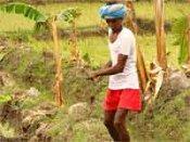 किसानों से सीधे बात करें कंपनियां : टिकैत