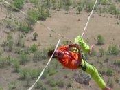 800 फीट की ऊंचाई पर इस शख्स ने जो किया, उसे सोचकर ही आपके रोंगटे खड़े हो जाएंगे