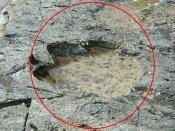 यहां मिले डायनासोर के 50 फुट बड़े पैरों के निशान, वैज्ञानिकों ने बताए सदियों पुराने