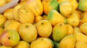 Mango: आपके डाइजेशन के ख्याल से लेकर लव लाइफ में गर्माहट तक, 'आम सीजन' में जानिए आम के फायदे