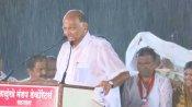 सतारा में भाजपा उम्मीदवार की हार के बाद VIRAL हो रही है शरद पवार की सभा की एक तस्वीर