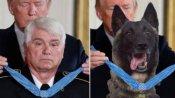 डोनाल्ड ट्रंप ने ट्विटर पर उड़ाया एक सैनिक का मजाक, पोस्ट की कुत्ते को मेडल पहनाने वाली फोटो