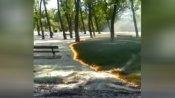 VIDEO: पार्क में लगी आग से जलने की बजाए हरी हुई सफेद घास, लोगों ने बताया चमत्कार