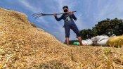 Lockdown: यूपी में एक दिन में औसतन 2 किसानों से भी गेहूं नहीं खरीद पा रहे हैं सरकारी खरीद केंद्र