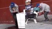 प्यासे कुत्ते को बुजुर्ग ने हाथ से पिलाया पानी, VIDEO देख लोग बोले- इंसानियत दिल में होती है, हैसियत में नहीं