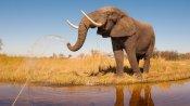 350 हाथियों की रहस्यमयी मौत ने विशेषज्ञों को किया हैरान-परेशान, जलाशय के पानी की होगी जांच