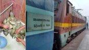 दिल्ली से बिहार पहुंची रेल में RPF को मिले 102 जिंदा कछुए, लाखों में बेचते हैं इन्हें तस्कर