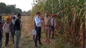 हरदोई: 14 साल के भीम का धान के खेत में पड़ा मिला शव, आठ दिन से गायब था