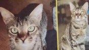 इस अफसर की लापता बिल्ली को ढूंढ़ने वाले को मिलेंगे 15 हजार रुपए