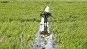 Budget 2021: किसानों के लिए बड़ा ऐलान कर सकती है सरकार, 19 लाख करोड़ तक मिल सकता है कृषि लोन
