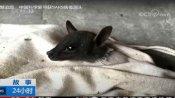 Video:चीन की वुहान लैब के वैज्ञानिकों का कबूलनामा, गुफा में सैंपल लेते वक्त संक्रमित चमगादड़ों ने काटा