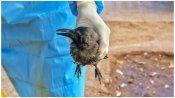 Bird Flu: क्या दिल्ली से सटे नोएडा में भी फैला बर्ड फ्लू, जानिए प्रशासन ने क्या दिया जवाब