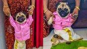 महिला ने अपने पालतू कुत्ते को पहनाई दूल्हे वाली ड्रेस, अब इंटरनेट पर कश्मीर से आया 'रिश्ता'