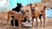 पीलीभीत: 13 साल की मासूम पर कुत्तों ने बोला हमला, मौके पर ही मौत
