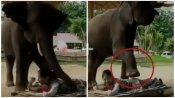 VIDEO: हाथी के सूंढ से मसाज करवा रही थी महिला, तभी उसने उठाया पैर और...