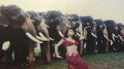 बहुत सारी हाथियों के बीच 'दिल से' डांस करती नजर आईं प्रीति जिंटा, देखें 'डिंपल गर्ल' की वायरल तस्वीर