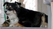 कुत्ते से बेइंताह प्यार करता था मालिक, घर वालों की जगह उसके नाम कर दी 36 करोड़ की संपत्ति