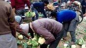 Pilibhit: एक रुपए किलो बिकी गोभी तो किसान ने 10 क्विंटल फेंक दी सड़क पर, फ्री में उठा ले गए लोग