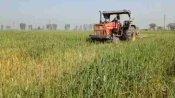 मथुरा: चार एकड़ खेत में खड़े गेहूं पर किसान ने चलाया ट्रैक्टर, कृषि कानूनों का कर रहे थे विरोध
