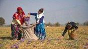 LoC:भारत-पाकिस्तान में सीजफायर का दिखने लगा है असर, J&K में लोगों ने शुरू की ऐसी मांग