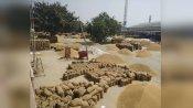 हरियाणा में गेहूं की खरीद 1 अप्रैल से शुरू होगी, जानिए कैसी चल रही है अनाज मंडियों की तैयारी