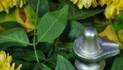 Mahashivratri 2021 : इस बार पारद शिवलिंग का करें अभिषेक, धन के लग जाएंगे ढेर