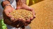 पाकिस्तान में गहराया खाद्यान्न संकट, सिर्फ 3 हफ्ते का बचा है गेहूं, सरकार में मची अफरातफरी
