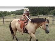 घोड़े की सवारी कर डॉग बन गया शहंशाह, देख्िाए वीडियो