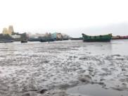 Gaja Cyclone: चक्रवाती तूफान 'गाजा'  से तमिलनाडु में तबाही, देखें तस्वीरें