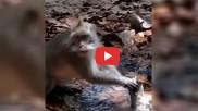 लीक हो रहे पानी को रोकने की कोशिश कर रहे इस बंदर ने दी लोगों को खास सीख, तेजी से वायरल हो रहा उसका ये VIDEO