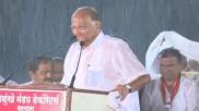 महाराष्ट्र विधानसभा चुनाव 2019: बारिश में भीगते हुए भाषण देते रहे शरद पवार, मानी ये गलती