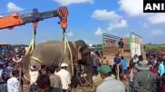 असम: वन मंत्री बोले- पांच लोगों को मारने वाला हाथी 'लादेन' नहीं