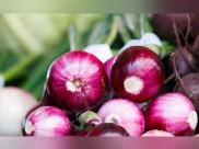 बिहार में सेब-अनार से भी महंगा प्याज; होटल-रेस्तरां पर बोझ बढ़ा, ग्राहकों से कह रहे- नहीं मिलेगा..