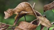 सूखी पत्तियों के बीच छिपा है एक जीव, पहली नजर में देखने पर खा जाएंगे धोखा