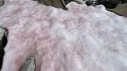 इस रहस्यमयी ग्लेशियर को देखकर वैज्ञानिक हैरान, सफेद की जगह बर्फ का रंग हुआ गुलाबी