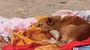 गयाः मालकिन के अंतिम संस्कार के बाद चार दिनों तक श्मशान घाट पर बैठा रहा कुत्ता