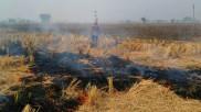 दिल्ली वालों के लिए राहत: पंजाब, हरियाणा और यूपी के NCR जिलों में इस साल कम जली पराली