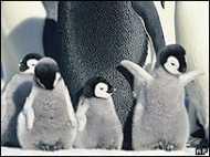 बढ़ती गर्मी से पेंग्विनों को ख़तरा