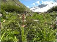 पौधों की प्रजातियों के विलुप्त होने का ख़तरा