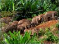 भूटानी हाथियों को भा रहे हैं संतरे