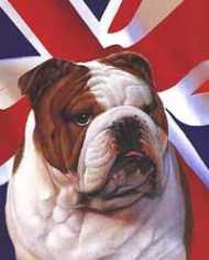 ब्रिटिश बुलडॉग की जगह छरहरे नस्ल के कुत्ते