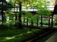 सिक्किम के रूमटेक में देखिये काई से बना बगीचा