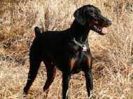 लावारिस कुत्तों को नार्थ ईस्ट भेजे जाने के बयान पर बवाल
