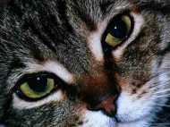 दुनिया की सबसे बूढ़ी बिल्ली अब नहीं करेगी 'म्याउं', पांच PM देख चुकी थी पोप्पी