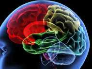 आपके फोन से पहले आपके दिमाग में है एक जीपीएस सिस्टम