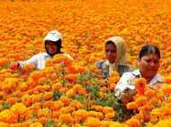 हर महीने 10 हजार रुपए से ज्यादा मुनाफा देते गेंदा के फूल